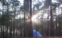 Gdansk Campsite Morning